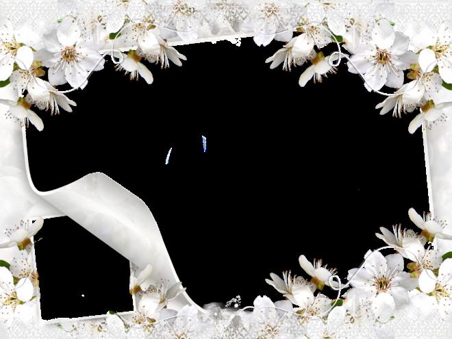 Trepadoras por color de flor Fichas de plantas Infojardín
