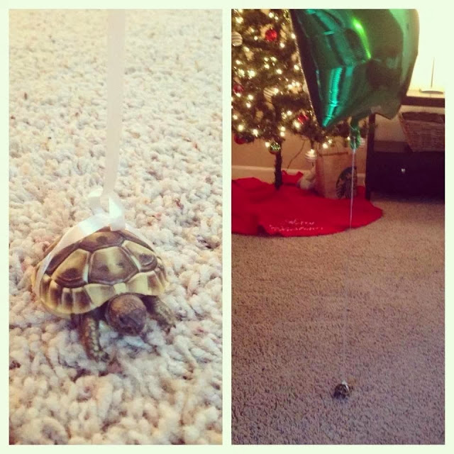 Funny animals of the week - 3 January 2014 (40 pics), turtle with balloons tied on his back