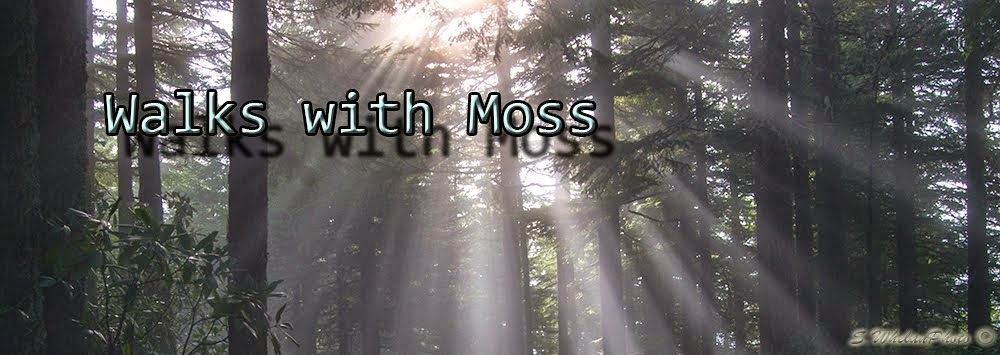 Walks with Moss