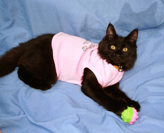 funny cats wearing clothes latest pictures funny and cute animals