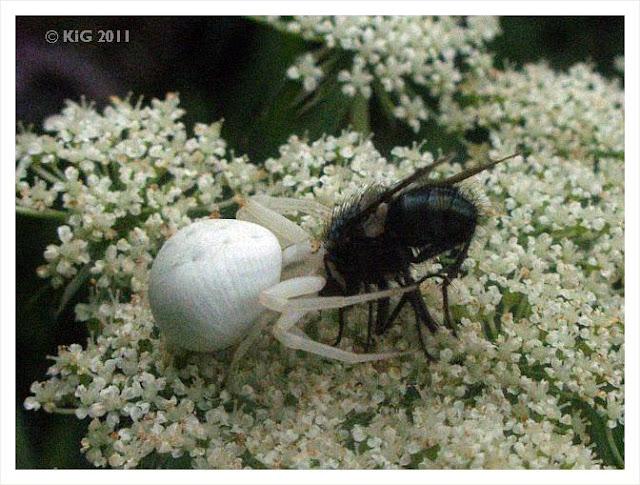 pflanzen und ihre insekten. Black Bedroom Furniture Sets. Home Design Ideas