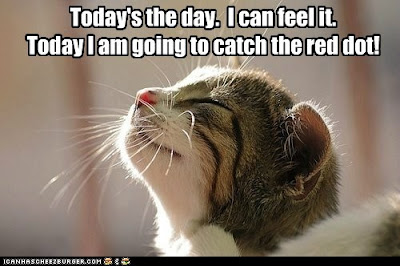 kitty says today I'm going to catch the red dot.