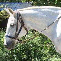 polo horse riding