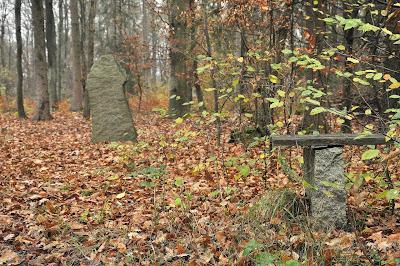 krzyż cygański jesienią (Wzgórza Strzelińskie)