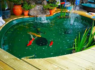 Desain Kolam Ikan Minimalis Terbaik dan Cantik