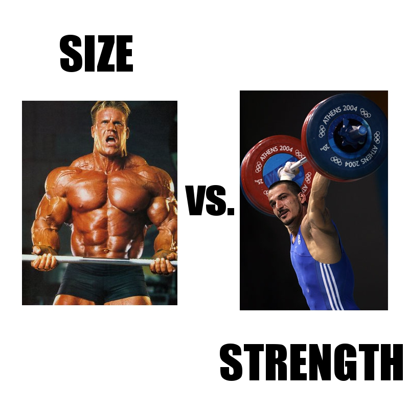 Muscle strength or size