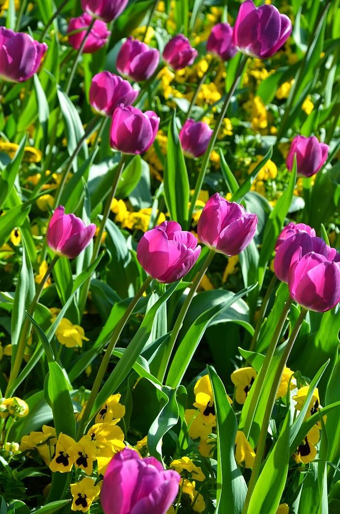 Весна в Германии, Фото - Ольга Граф