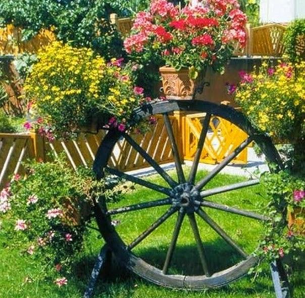 Цветы на приусадебном участке фото