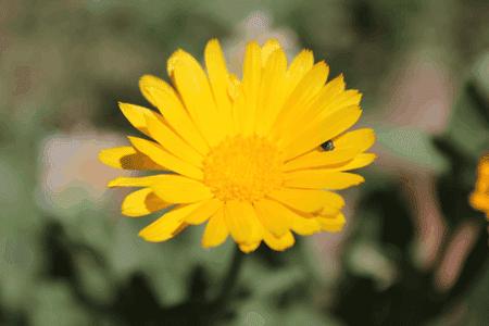Ejemplo de imagen definitiva después del trabajo de optimización