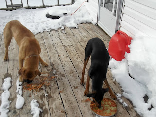 spaghetti eating dogs