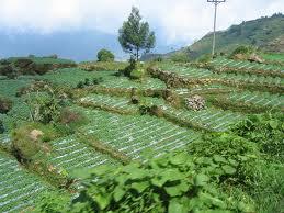 Pengertian Pertanian Maju Bersama Pertanian