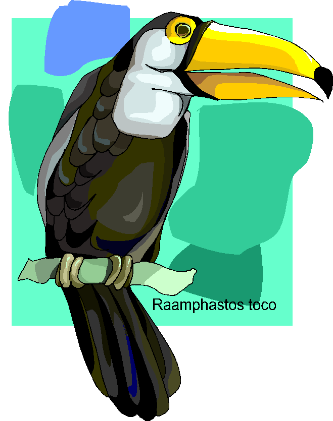 Toco Toucan Bird Free Clipart