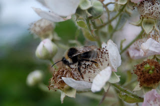 Bees are vital to our survival
