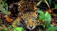 SÍMBOLO MÁXIMO DA AMAZÔNIA