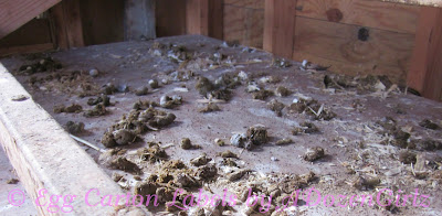 Chicken droppings on droppings board in chicken coop.