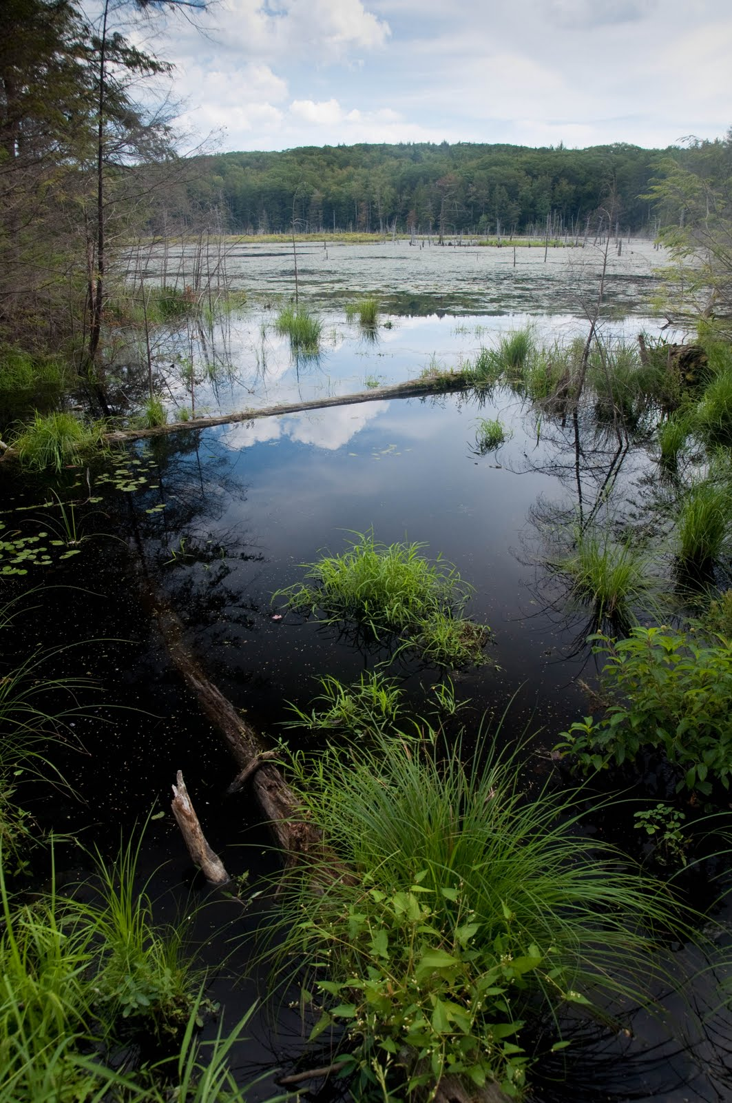 A view of the 16-acre beaver marsh at the CAS Croft Preserve