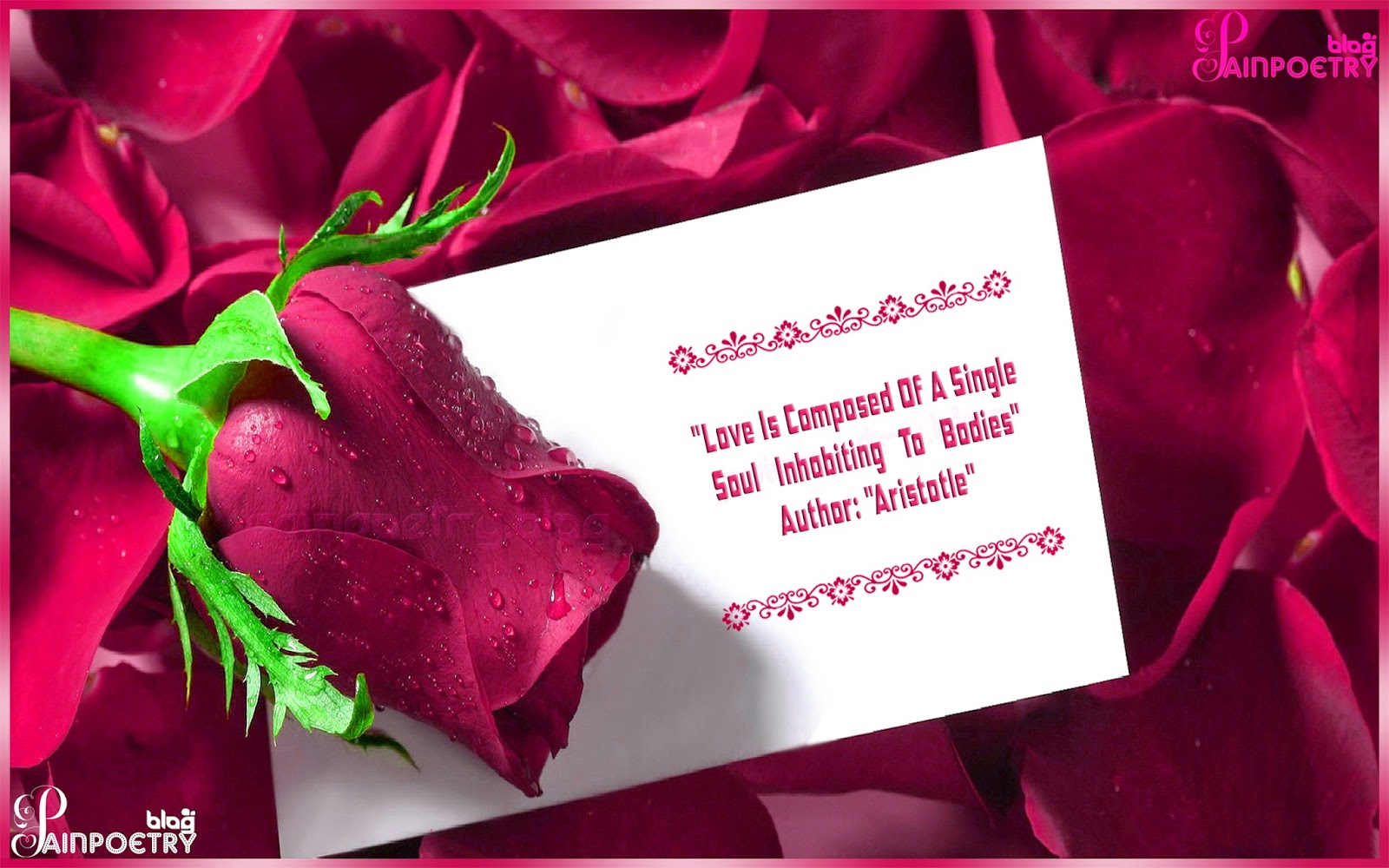 Love-Greeting-Quote-For-Lovers-With-A-Rose-Image-Wallpaper-Photo-Wide