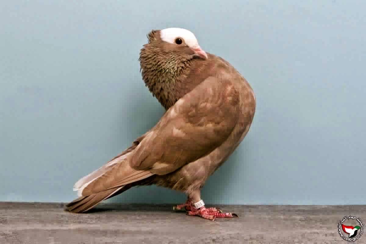 Pigeons Photos