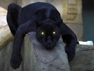 Funny Panther