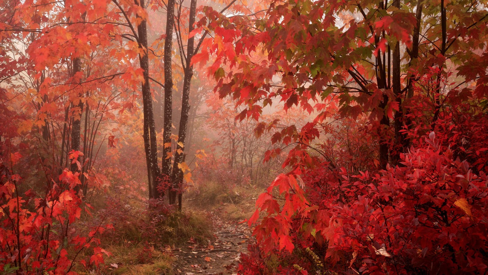 red fall wallpaper - photo #9