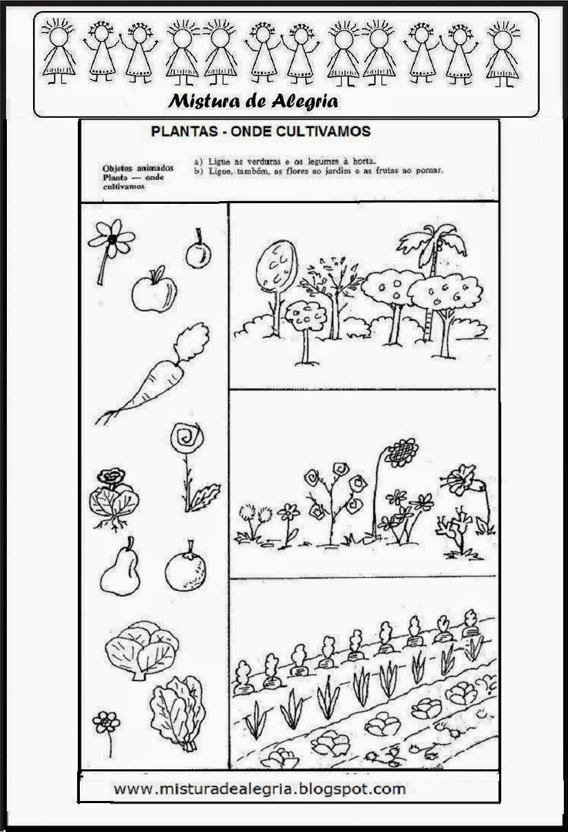 atividades alfabetizacao jardim horta pomar:ESTUDO SOBRE AS PLANTAS- MEIO AMBIENTE E PRIMAVERA- PARTES DA PLANTA