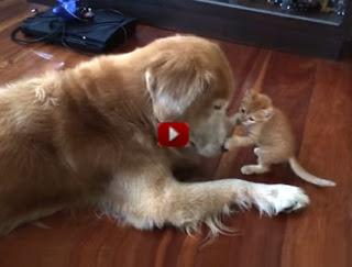 Cane e gatto insieme la convivenza è possibile