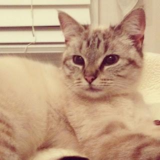 Himpunan Gambar Kucing Comel II  - Peminat Kucing