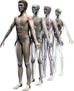 عشر حقائق مُذهلة عن الجسم البشري ستعرفها لأول مرة