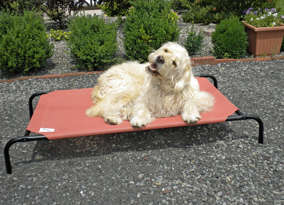 if your loving pet is really pampered and you always want it to have the best then make sure its bed is a coolaroo dog bed they will love you for it