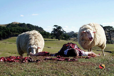 Các Hình ảnh trong Phim Cừu Ăn Thịt Người - Black Sheep 2006 (HD) Vietsub Online