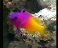 All About Aquarium Fis...