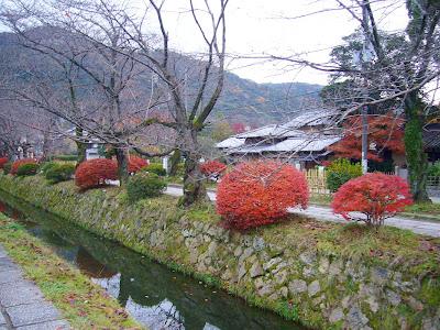 京都市左京区・哲学の道の紅葉