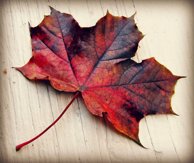colourful Fall leaf on a wood grain background