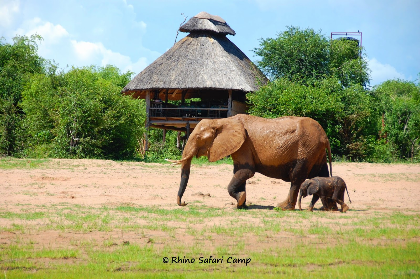Rhino Safari Camp - Matusadona National Park - Lake Kariba, Zimbabwe