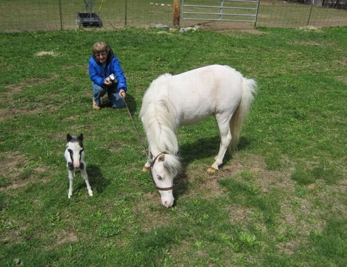 Einstein the smallest horse in the world - photo#23