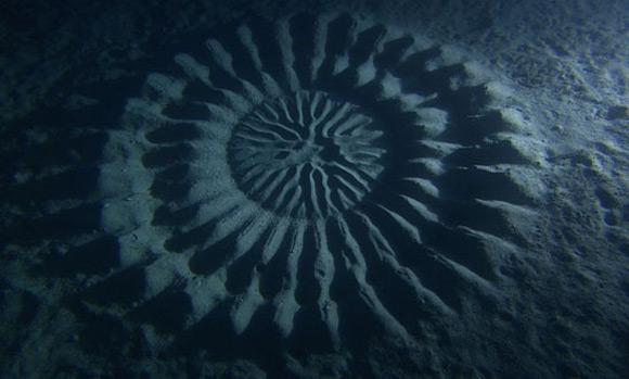 Anese Puffer Fish Circle