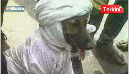 Ini Sudah Lebih Gambar Anjing Memakai Serban Dan Jubah Menghina Masyarakat Islam