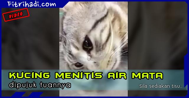 (Video) Kucing Sakit Menitis Air Mata Dipujuk Tuannya