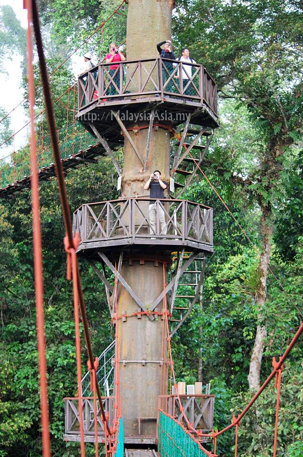 Canopy Walk at Danum Valley Sabah & Canopy Walk at Danum Valley Sabah - Malaysia Asia