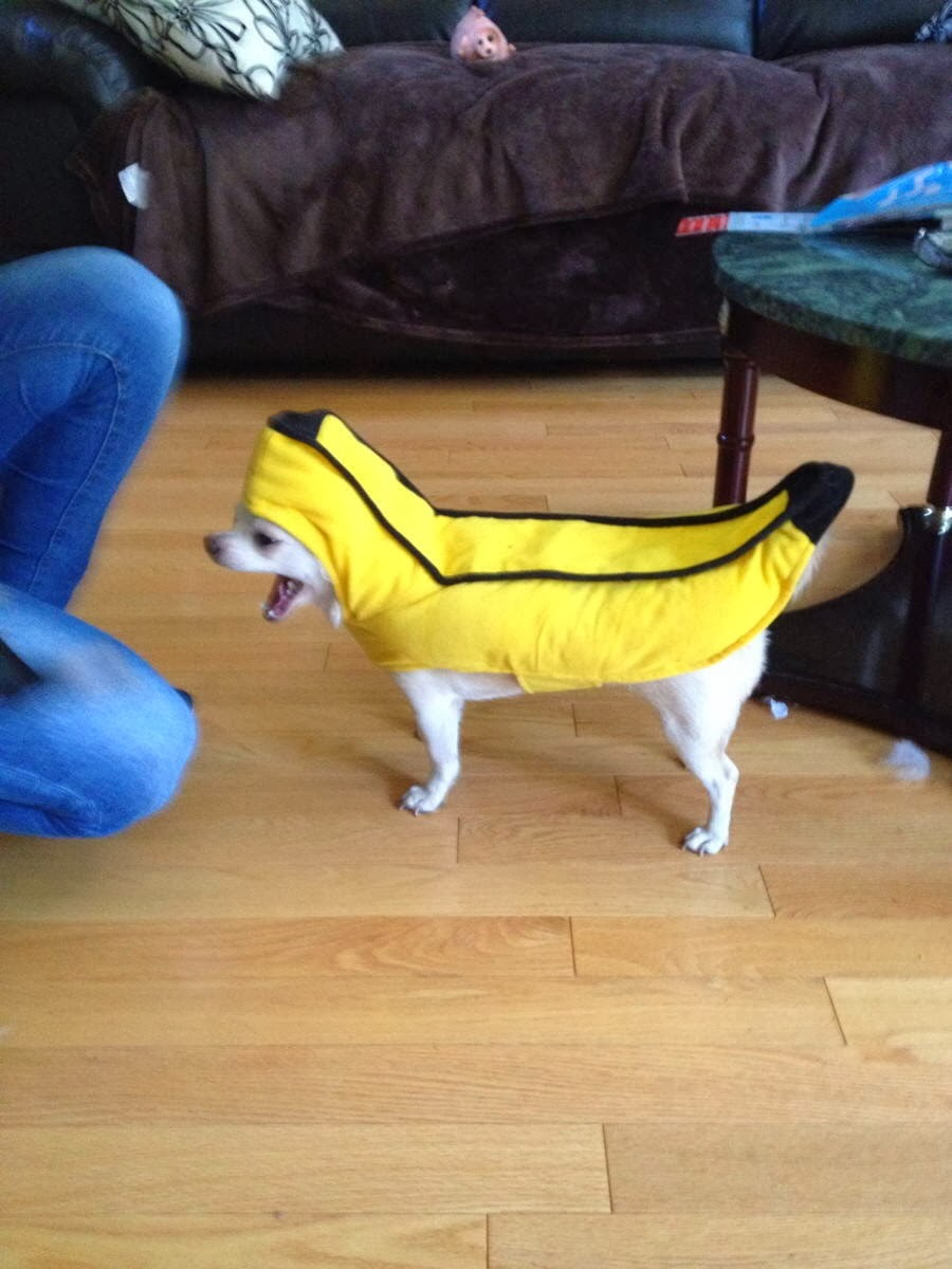 Cute dogs - part 7 (50 pics), little dog wears banana costume