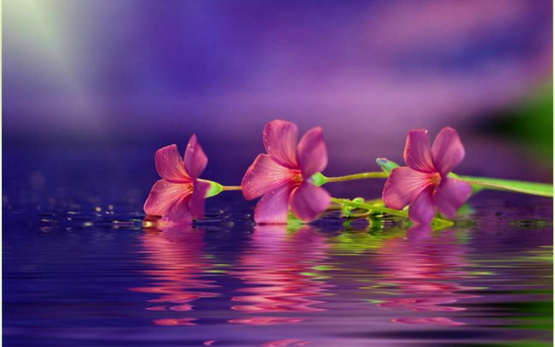 http://4.bp.blogspot.com/-glPuDAcEkI8/TwnW6yVeaLI/AAAAAAAAEAw/BrlgoDADsMs/s1600/1288603119_1440x900_delicate-fantasy-flower.jpg