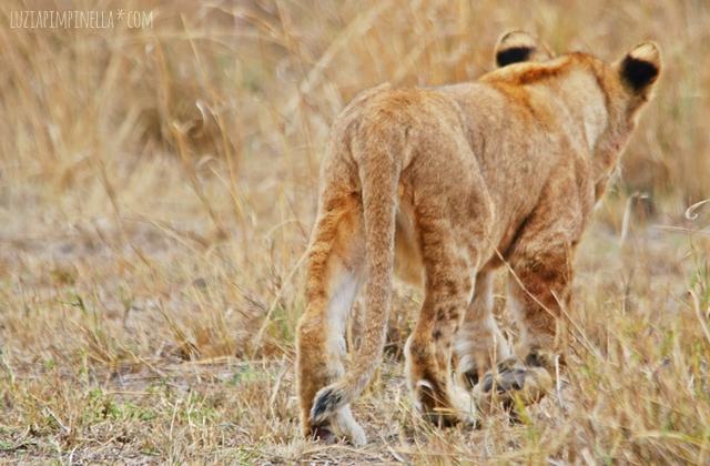 luzia pimpinella | travel tansania | safari in der serengeti - löwenbaby
