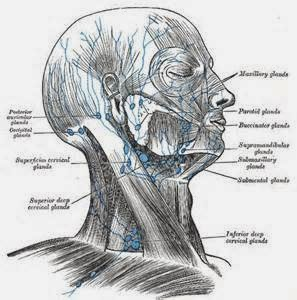 Feber stiv nakke hodepine