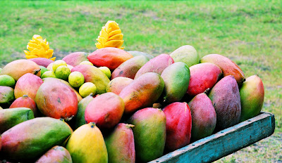 Puesto sobre ruedas de mangos paraíso, petacón o tommy.