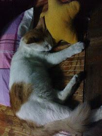 Miau yang ku cinta mati