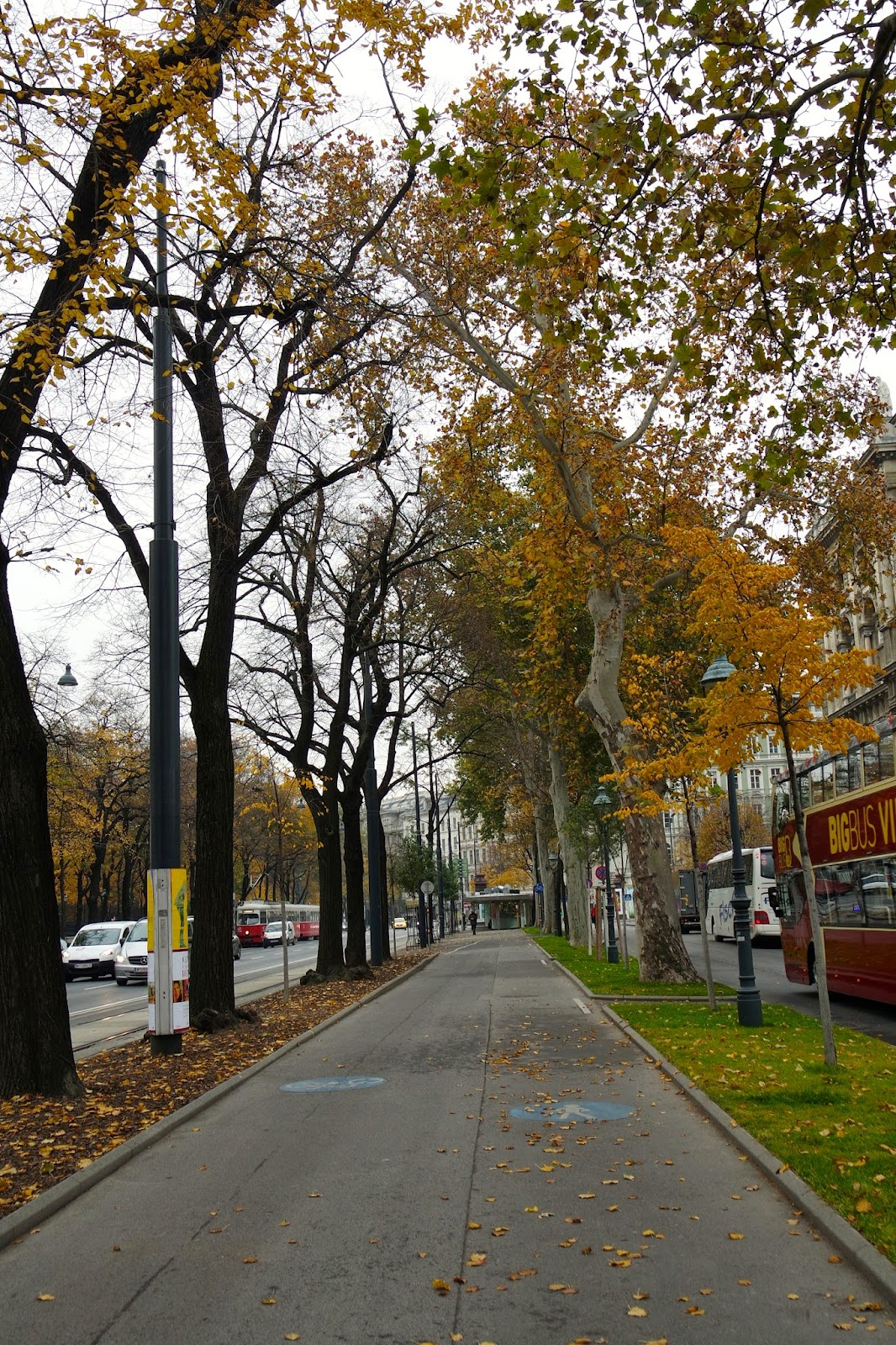 Autumn Yellow Trees near Maria Theresien Platz Vienna