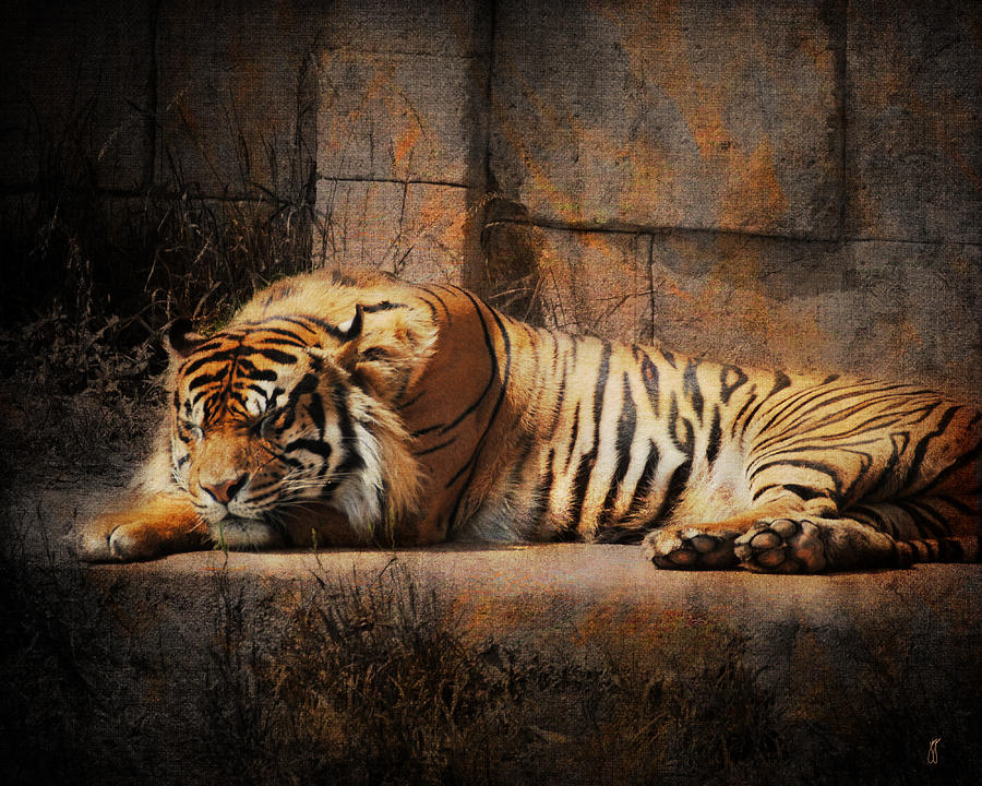 Tiger sleeping D10