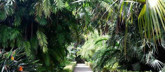 Jardín Botánico de Puerto de la Cruz