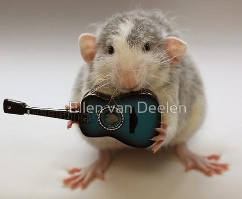 07-Acoustic-Guitar-Player-Musical-Dumbo-Rat-Ellen-Van-Deelen-www-designstack-co