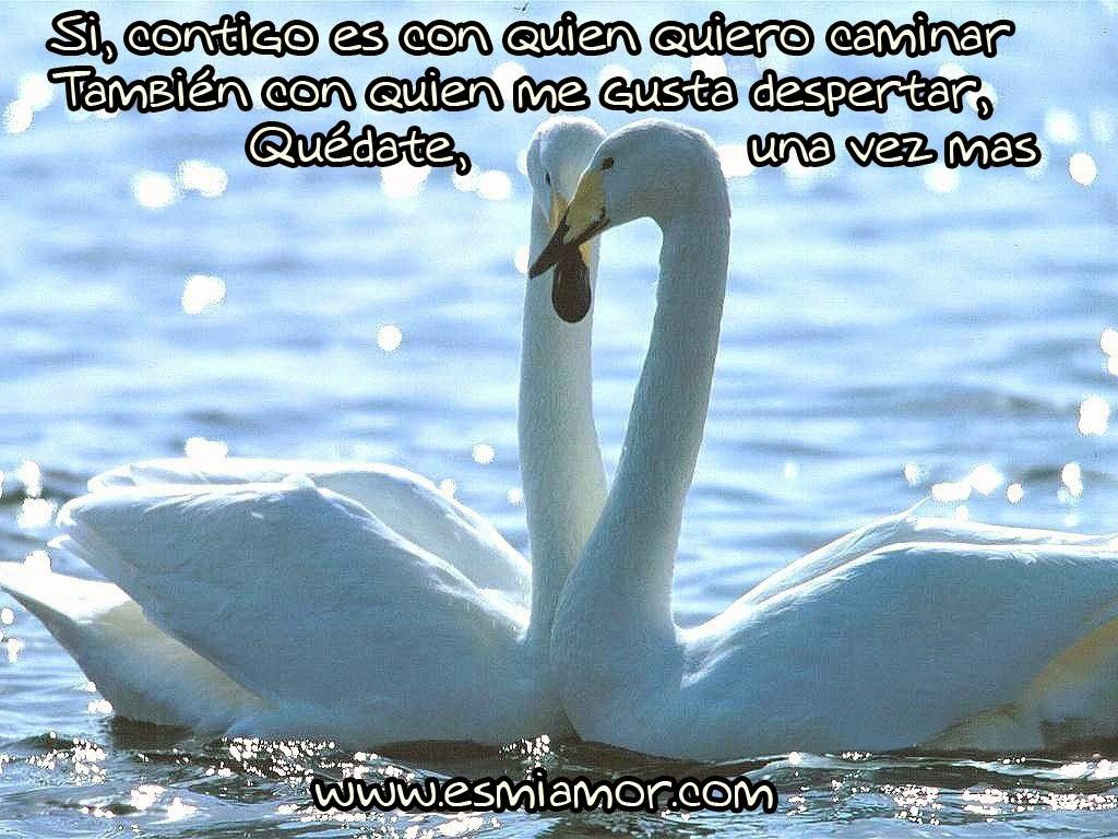 ... de cisnes enamorados,imágenes de amor con frase de canciones de
